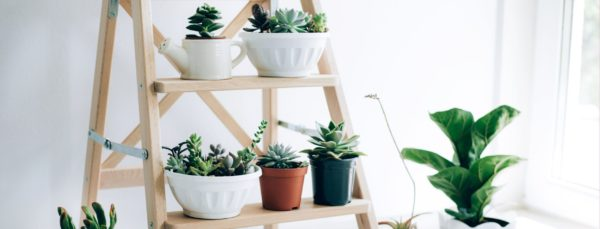 Plantes d'intérieur et chauffage au bois