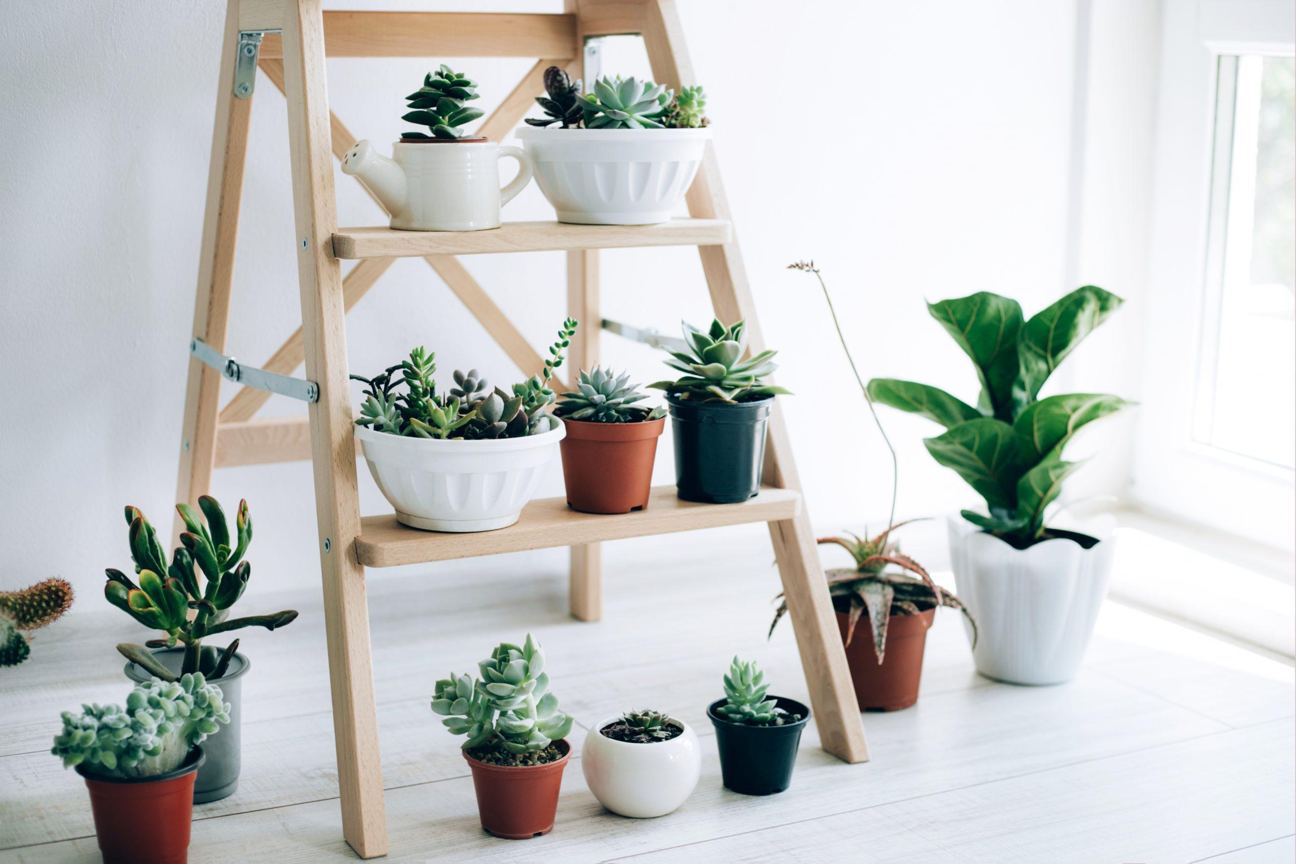 Comment conserver ses plantes d'intérieur en hiver ?