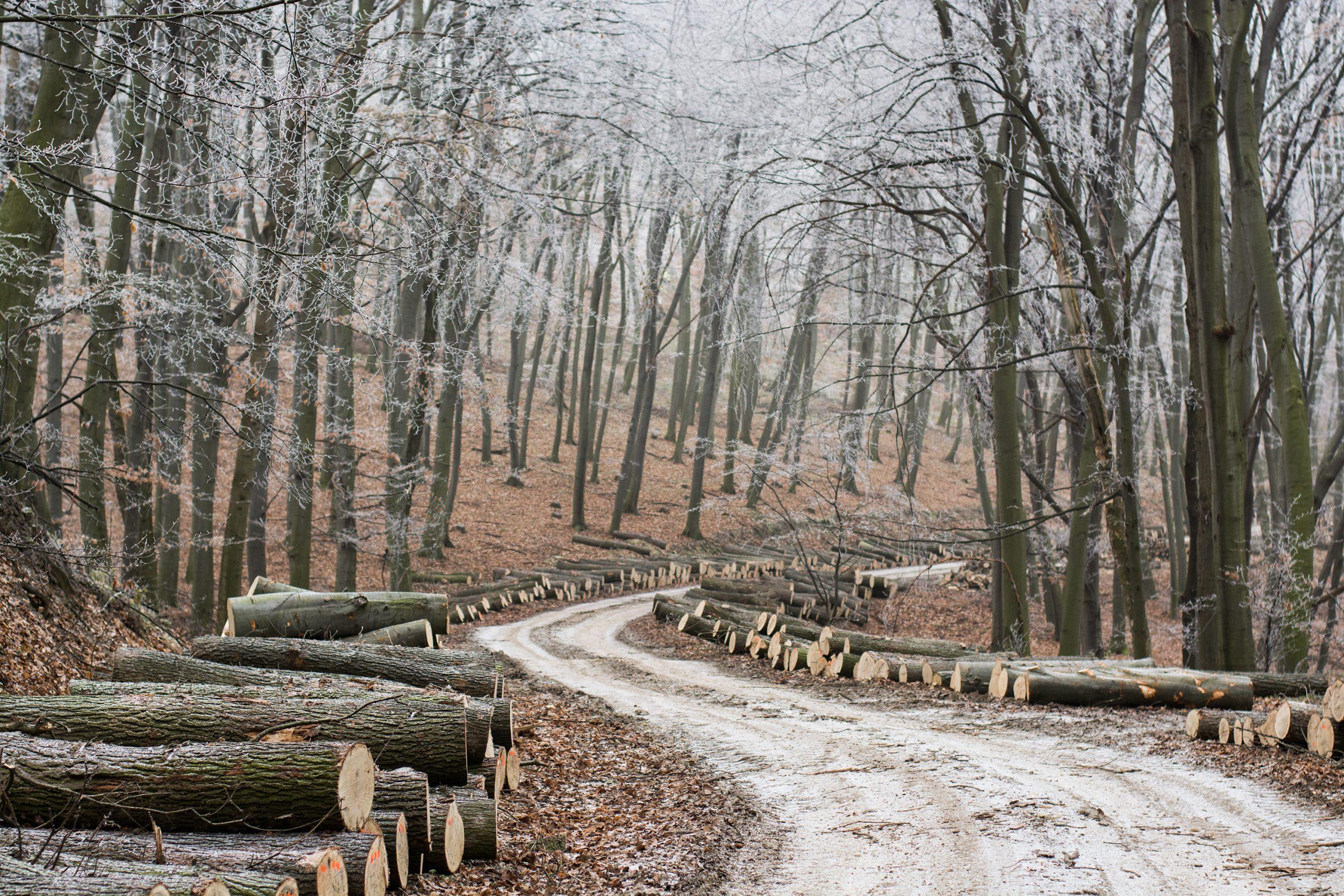 D'où vient le bois de chauffage ?